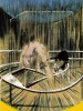 Étude pour un nu accroupi (1952)